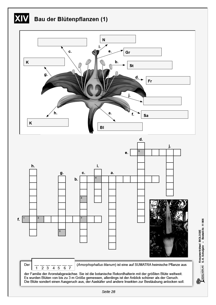 Aufbau Kreuzworträtsel